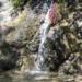 ロサンゼルス子供とハイキング!滝を見に Monrovia Canyon Park ☆ワクワクドキドキ探検たーい♪